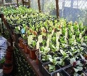 Greenhouse Florist Sheffield 8