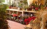 Greenhouse Florist Sheffield 10